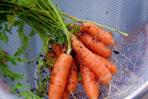 Bạn có thể uống nước ép cà rốt hàng ngày để có một làn da căng mịn, sạch mụn